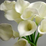 Calla Lily bouquets - Need4Flowers
