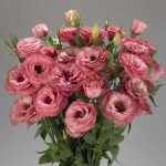 Lisianthus bouquets - Need4Flowers
