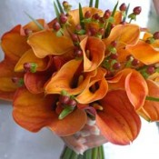 Orange Calla Lily bouquets (0)