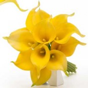 Yellow Calla Lily bouquets (2)