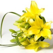 Yellow lily bouquets (0)