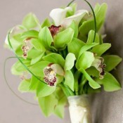 Green orchid bouquets (0)