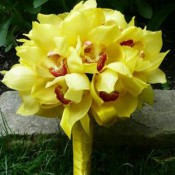 Yellow orchid bouquets (0)
