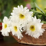 Chrysanthemums basket - Need4Flowers