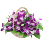 Orchids basket - Need4Flowers
